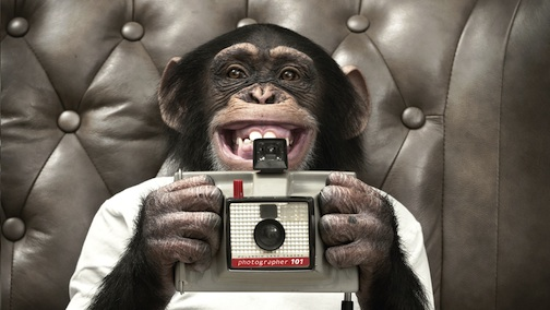 Chimp with old camera image